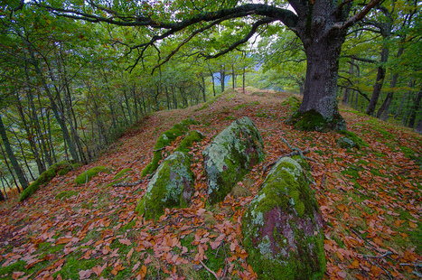 Le Chêne vers Ardengost - Hervé Delesalle le 12 octobre 2012 | Vallée d'Aure - Pyrénées | Scoop.it