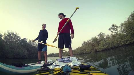 Stand Up Paddle Boarding in UAE - Enjoy a Unique View of the Waters surrounding Sir Bani Yas Island | Sandy Beach Trips | Travel Around the World | Vacations | Excursions | Attractions | Scoop.it