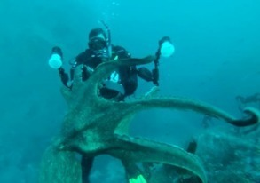 Giant Pacific Octopus Encountered by two Scuba Divers | Austrian Tribune | All about water, the oceans, environmental issues | Scoop.it