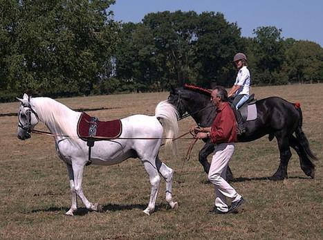 Fête du cheval percheron à l'écomusée - Le Perche   Cheval Orne   Scoop.it
