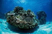 Top 10 Magical Dives | Travel | Scoop.it