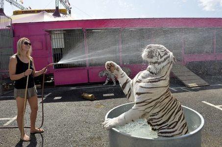 En Espagne, la Catalogne interdit les animaux sauvages dans les cirques   animaux   Scoop.it