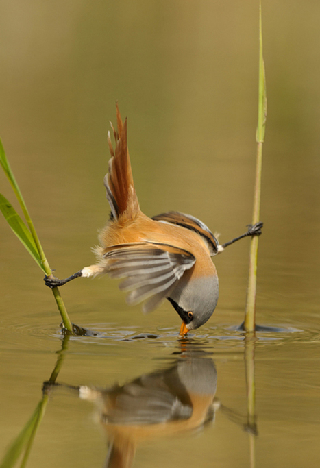 Bird Photography - 25 Brilliant Examples   AntsMagazine.Com   All about nature   Scoop.it