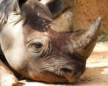 Stop South African Mine That Threatens Rhino Sanctuary  - The Petition Site | GarryRogers Biosphere News | Scoop.it