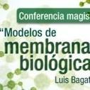 Luis Bagatolli, una eminencia en Física, Química, Bioquímica y ... | Ciencia | Scoop.it