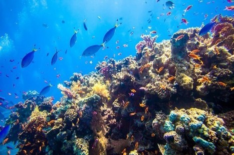 """07.11.13 - """"Coral Bleaching – a danger sign for ocean health"""" - Your ... 