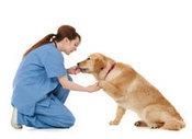 Maladies du chien, lexique vétérinaire du chien malade - Wamiz | CaniCatNews-santé | Scoop.it