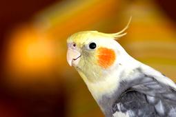 Choosing a Pet Bird - Bird Care Tips & Advice | Love That Pet | Going Green | Scoop.it