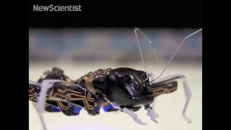 Big bionic ants team up to move objects | Post-Sapiens, les êtres technologiques | Scoop.it