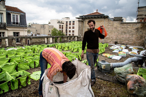 Et si on essayait l'agriculture sur toit? | Transition | Scoop.it