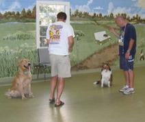 Bien choisir son éducateur | Dog Behavior | Scoop.it