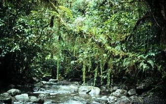 Southeast Asian Rainforests | Year 9 Geography - Asia and its biomes | Scoop.it