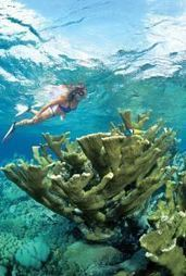 Best Snorkelling Experience in Bonaire | All about water, the oceans, environmental issues | Scoop.it