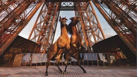 Longines Paris Eiffel Jumping : c'est parti pour le 5* - Francetv info | Cheval et sport | Scoop.it