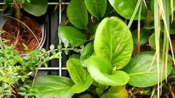 Des plantes dans les villes pour lutter face au réchauffement ... - Francetv info   Résilience climatique des villes   Scoop.it
