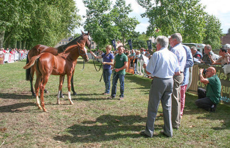 Why racing professionals flock to the equine 'beauty contests' of rural France | Thoroughbred Racing Commentary | Horse Racing News | Scoop.it