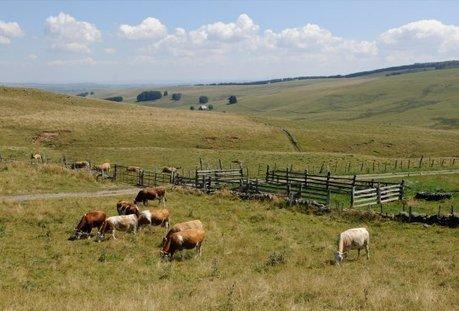 Cette petite coopérative fromagère qui paie ses agriculteurs bien mieux que les géants agroalimentaires | Gardarem les paysans | Scoop.it