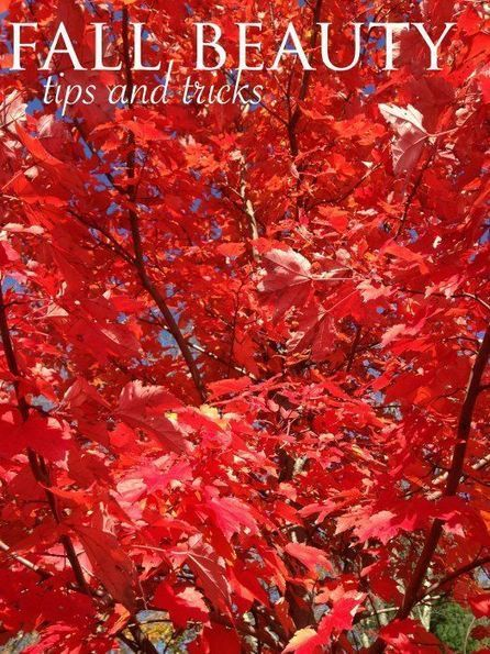All 4 Seasons Tips and Ideas   Garden Ideas by Team Pendley   Scoop.it