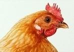 Industrie agro-alimentaire, ou tortionnaire? La viande à prix discount, ce sont les animaux qui la paient... très, très cher!   Une seule Terre pour tous - Only one Earth for all   Scoop.it