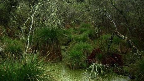 Précieuses forêts riveraines: La reconquête des ripisylves | Zones humides - Ramsar - Océans | Scoop.it