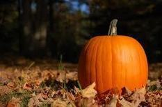 Winter Delight: Pumpkin Recipes - Health, Weight, Fitness and more... | health alternatives | Scoop.it