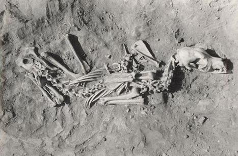 What prehistoric dog burials tell us about owners | World Neolithic | Scoop.it