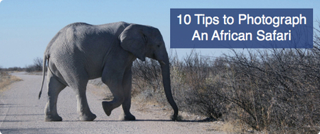 10 Tips to Photograph An African Safari - Digital Photography School | Southern African Travel Adventures | Scoop.it