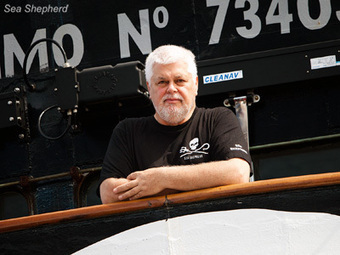 Sea Shepherd :: Statement from Captain Paul Watson | Nature Animals humankind | Scoop.it