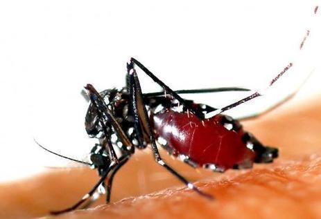 Zika : une nouvelle preuve de la capacité du virus à s'attaquer au système nerveux | Toxique, soyons vigilant ! | Scoop.it