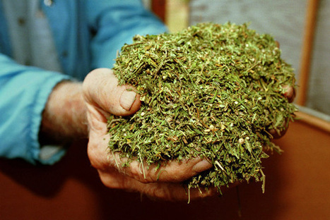 DEA Ratifies Spike in Marijuana for Research - US News   Research Capacity-Building in Africa   Scoop.it