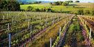 La remarquable réussite des côtes-de-gascogne   Epicure : Vins, gastronomie et belles choses   Scoop.it
