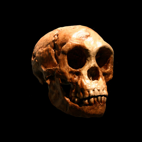 Mysterious ancient human crossed Wallace's Line | Heritage Daily | Kiosque du monde : Asie | Scoop.it