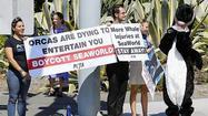 PETA protests injury to whale at SeaWorld San Diego | Dolphins | Scoop.it