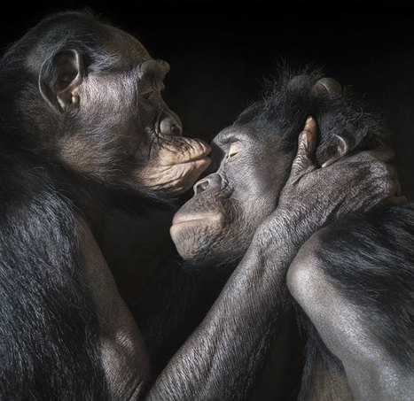 #Kissing #Animals Prove That Kisses Aren't Just For People #art #love #photography #valentinesday | What about? What's up? Qué pasa? | Scoop.it