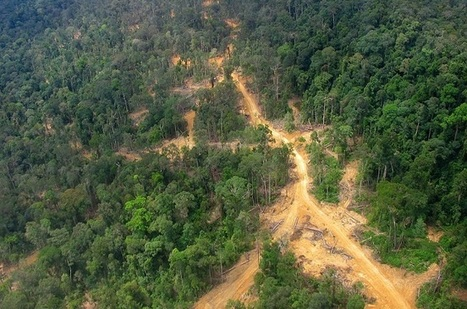 Tropical forests may be giving climate extra help | Alex Kirby | Climate News Network | @The Convergence of ICT & Distributed Renewable Energy | Scoop.it