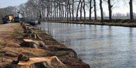 Canal du Midi : 7000 platanes abattus, 1000 arbres replantés | Histoire Canal du Midi | Scoop.it
