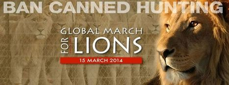 Join Us: Global March for Lions March 15 2014 | Trophy Hunting: It's Impact on Wildlife and People | Scoop.it