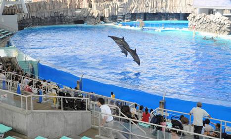 [Eng] Les coupures de courant pèsent sur les zoos et aquariums pour la sécurité des animaux | The Japan Times Online | Japon : séisme, tsunami & conséquences | Scoop.it