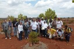 Agroécologie : Madagascar, un pays modèle pour l'Afrique et l'Europe | Chimie verte et agroécologie | Scoop.it