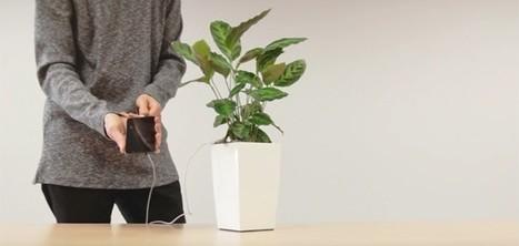 Rechargez votre smartphone grâce à l'énergie des plantes   IDEES BUSINESS   Scoop.it