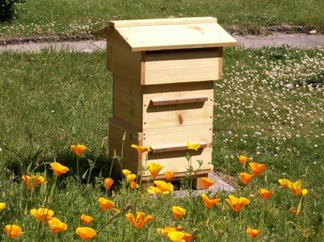 Backyard Beekeeping: Hives Demystified | Wings, Worms, and Wonder | Brian Castellani | Scoop.it