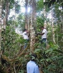 Floresta Amazônica - Mundo Educação | projeto scoopit terceiro trimestre | Scoop.it