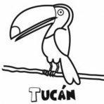 Dibujos para colorear de animales de la selva | animales de la selva55 | Scoop.it