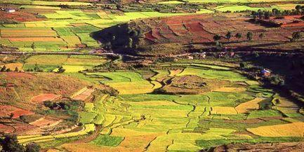 Le système bio qui quadruple les rendements du riz   Agriculture et Développement   Scoop.it