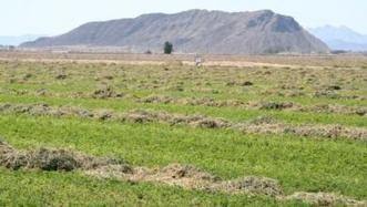 'Summer slump' management in low desert alfalfa | Western Farm Press | CALS in the News | Scoop.it