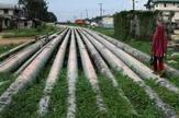Nigeria and Morocco sign gas pipeline deal to link Africa to Europe   Energy and Environmental Security   Scoop.it