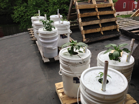 Rooftop Gardening | Urban Food Production | Scoop.it
