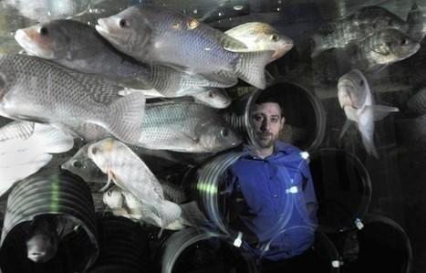 Something's fishy in urban backyards | Wellington Aquaponics | Scoop.it