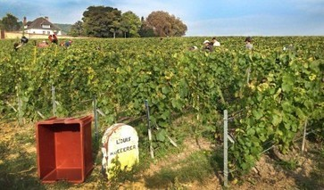 'Biodynamic is the future for Champagne,' says Louis Roederer cellar master | Grande Passione | Scoop.it