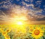 The Healing Power of Poetry | Sending My Love | Scoop.it
